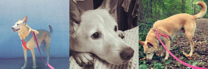 daphne Taylor's puppy